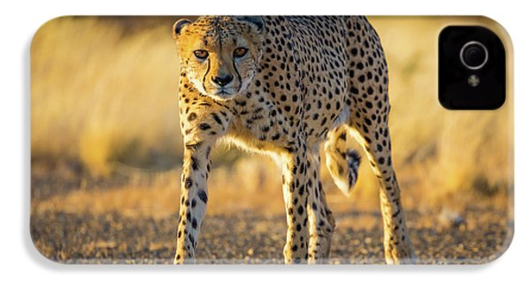 African Cheetah IPhone 4 Case by Inge Johnsson
