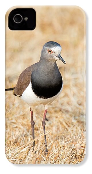 African Wattled Lapwing Vanellus IPhone 4 Case by Panoramic Images