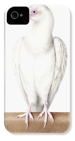 Albino Crow IPhone 4 Case