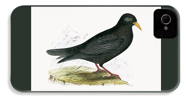 Alpine Chough IPhone 4 Case