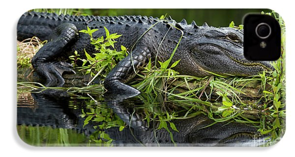 American Alligator In The Wild IPhone 4 Case by Dustin K Ryan