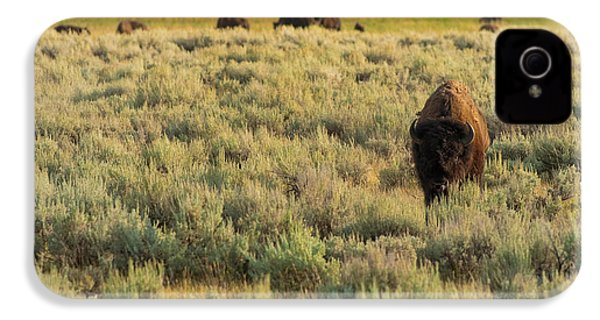 American Bison IPhone 4 Case by Sebastian Musial