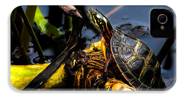 Ant Meets Turtle IPhone 4 Case by Bob Orsillo