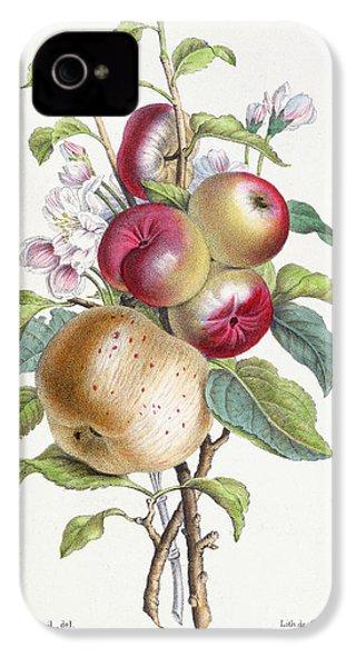 Apple Tree IPhone 4 Case
