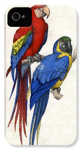 Aracangua And Blue And Yellow Macaw IPhone 4 Case