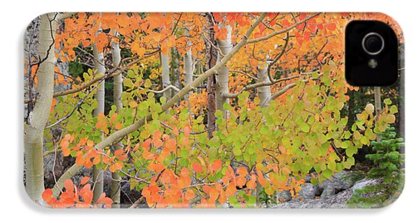 Aspen Stoplight IPhone 4 Case by David Chandler