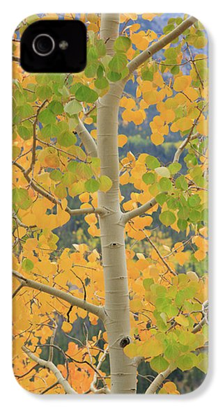 Aspen Watching You IPhone 4 Case by David Chandler