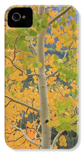 IPhone 4 Case featuring the photograph Aspen Watching You by David Chandler
