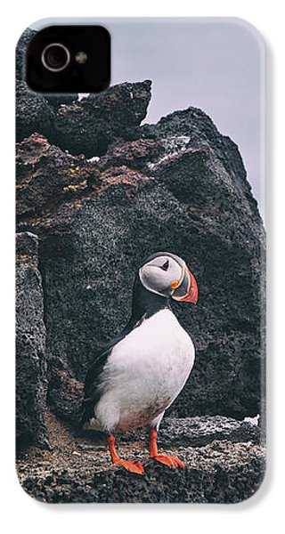 Atlantic Puffin IPhone 4 Case