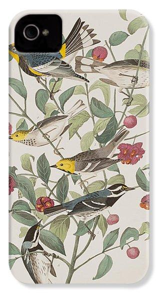 Audubons Warbler Hermit Warbler Black-throated Gray Warbler IPhone 4 Case