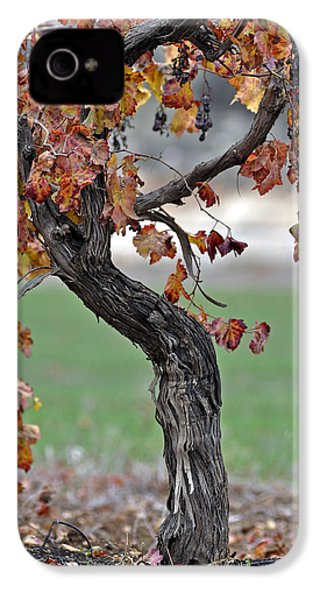 IPhone 4 Case featuring the photograph Autumn At Lachish Vineyards 3 by Dubi Roman