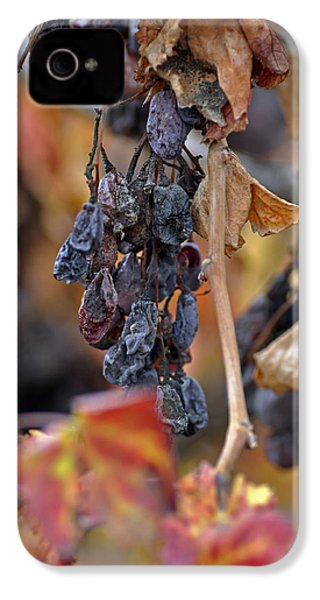 IPhone 4 Case featuring the photograph Autumn At Lachish Vineyards 4 by Dubi Roman