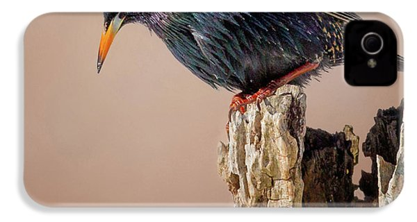 Backyard Birds European Starling Square IPhone 4 Case by Bill Wakeley