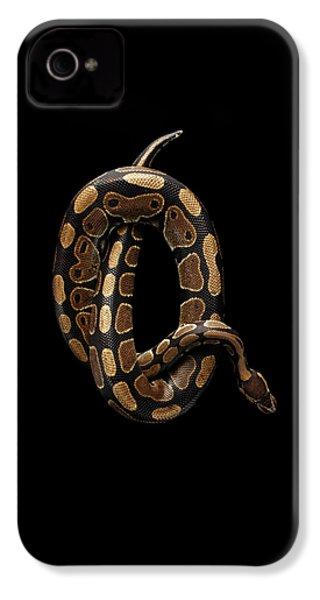 Ball Or Royal Python Snake On Isolated Black Background IPhone 4 Case by Sergey Taran