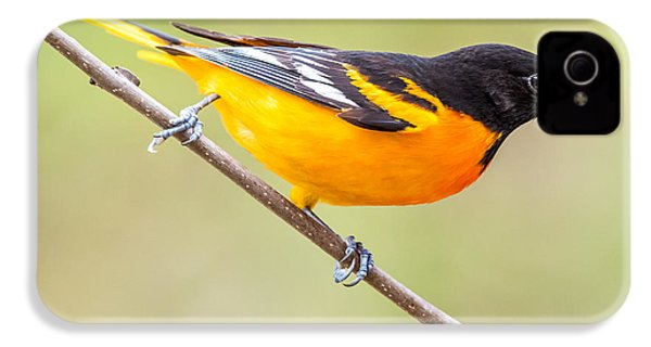 Baltimore Oriole IPhone 4 Case by Paul Freidlund