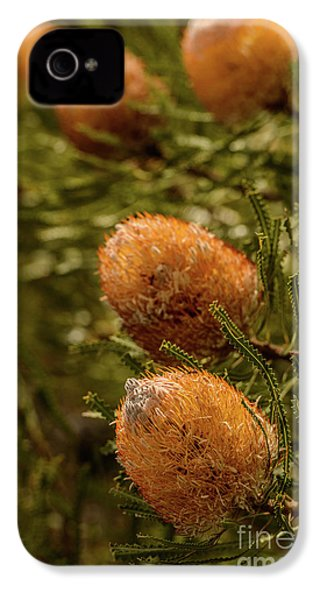 IPhone 4 Case featuring the photograph Banksia by Werner Padarin