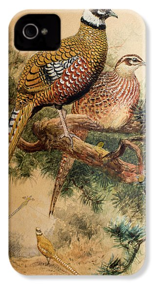 Bar-tailed Pheasant IPhone 4 Case by Joseph Wolf