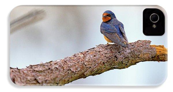 Barn Swallow On Assateague Island IPhone 4 Case by Rick Berk
