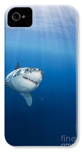 Beautiful Great White IPhone 4 Case by Dave Fleetham - Printscapes