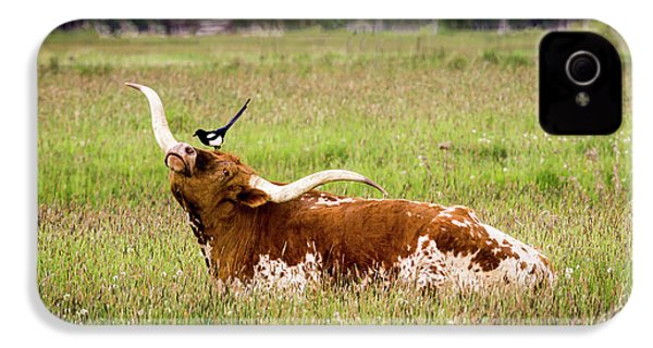 Best Friends - Texas Longhorn Magpie IPhone 4 Case by TL Mair