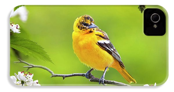 Bird And Blooms - Baltimore Oriole IPhone 4 / 4s Case by Christina Rollo