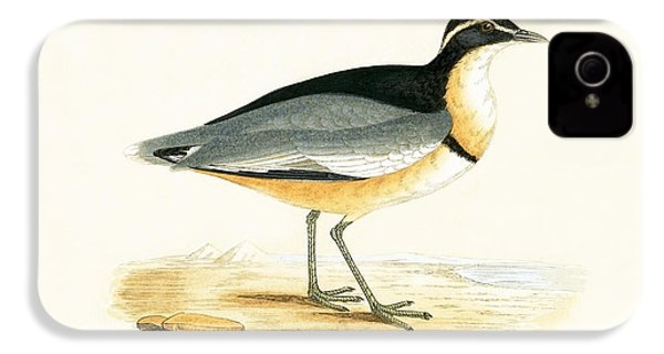 Black Headed Plover IPhone 4 Case by English School