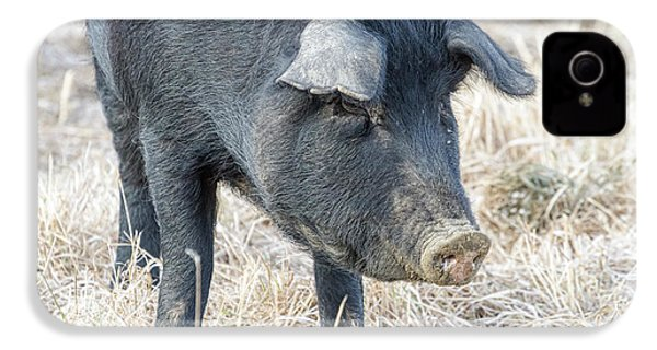 IPhone 4 Case featuring the photograph Black Pig Close-up by James BO Insogna