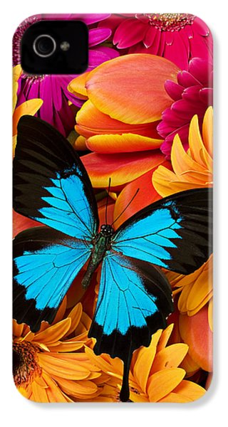 Blue Butterfly On Brightly Colored Flowers IPhone 4 Case by Garry Gay