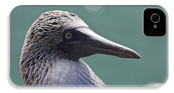 Blue Footed Booby II IPhone 4 / 4s Case by Dave Fleetham