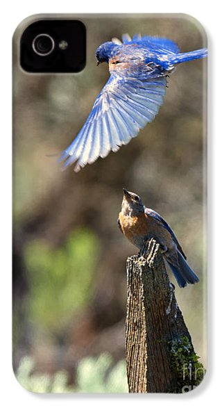 Bluebird Buzz IPhone 4 / 4s Case by Mike Dawson