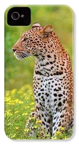 Botswana Leopard  IPhone 4 Case
