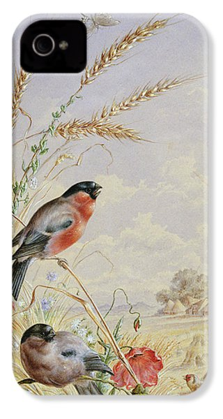 Bullfinches In A Harvest Field IPhone 4 Case
