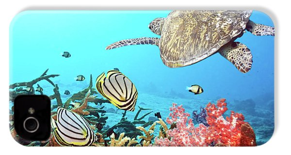 Butterflyfishes And Turtle IPhone 4 Case by MotHaiBaPhoto Prints