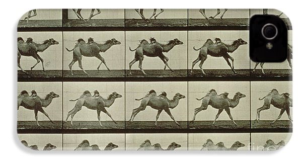 Camel IPhone 4 Case by Eadweard Muybridge