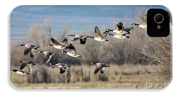 Canada  Geese Flock IPhone 4 Case by Mike Dawson