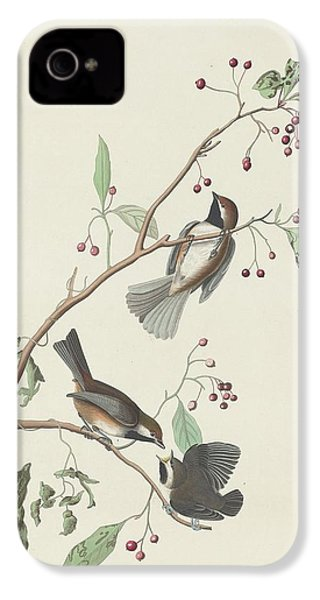 Canadian Titmouse IPhone 4 Case by Rob Dreyer