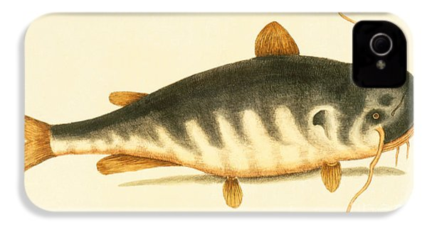 Catfish IPhone 4 Case by Mark Catesby