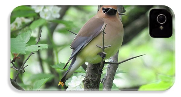 Cedar Wax Wing IPhone 4 Case by Alison Gimpel