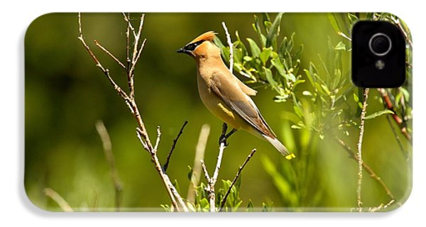 Cedar Waxwing At Glacier IPhone 4 Case by Adam Jewell