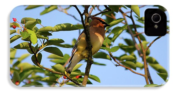 Cedar Waxwing IPhone 4 Case by Mark A Brown