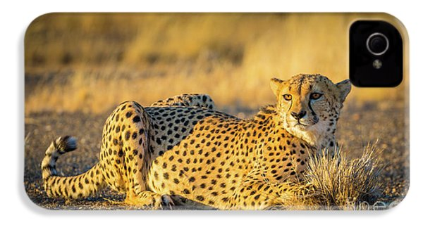 Cheetah Portrait IPhone 4 Case by Inge Johnsson