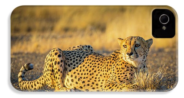 Cheetah Portrait IPhone 4 / 4s Case by Inge Johnsson