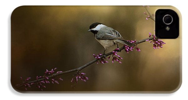 Chickadee In The Golden Light IPhone 4 Case