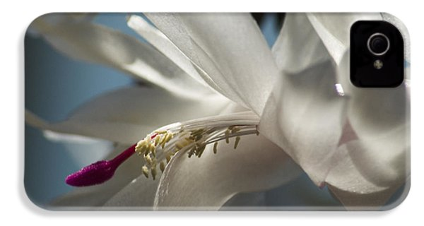 IPhone 4 Case featuring the photograph Christmas Cactus Blossom by Yulia Kazansky