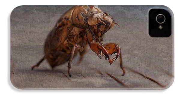 Cicada Shell IPhone 4 Case by Tom Mc Nemar