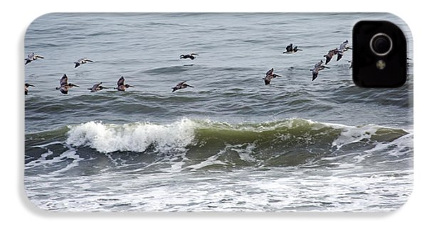 Classic Brown Pelicans IPhone 4 / 4s Case by Betsy Knapp