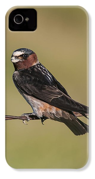 IPhone 4 Case featuring the photograph Cliff Swallow by Gary Lengyel