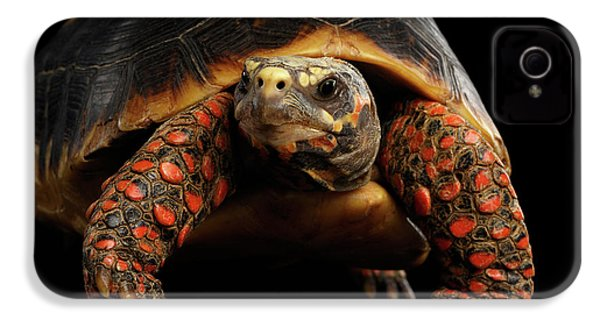Close-up Of Red-footed Tortoises, Chelonoidis Carbonaria, Isolated Black Background IPhone 4 Case by Sergey Taran