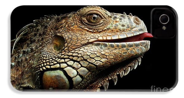 Close-upgreen Iguana Isolated On Black Background IPhone 4 Case by Sergey Taran