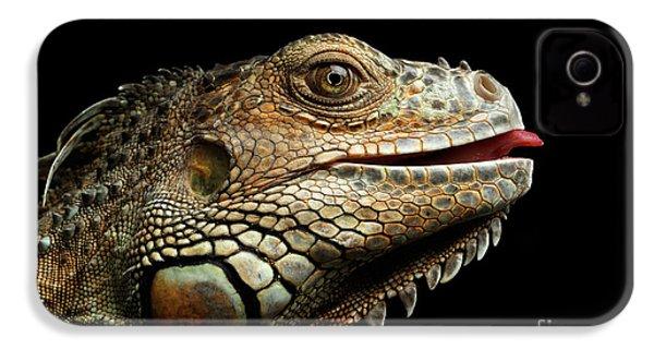 Close-upgreen Iguana Isolated On Black Background IPhone 4 / 4s Case by Sergey Taran